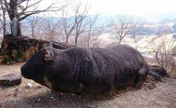 旅がらすの日曜日 ~社寺修復塗師の街並み散策日誌 群馬県 牛伏山自然公園