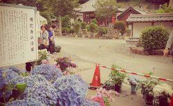 旅がらすの日曜日 ~社寺修復塗師の街並み散策日誌 愛知県 蒲郡市 形原温泉