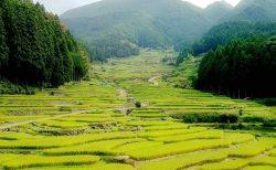 旅がらすの日曜日 ~社寺修復塗師の街並み散策日誌 愛知県 新城市